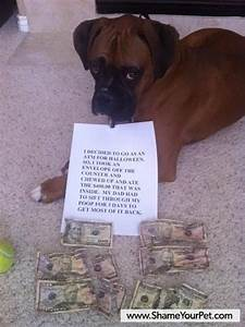 Boxer shamed for eating $400 dollars…… just too funny and irritating all at once……LOL…. :), such ... Dog Bites