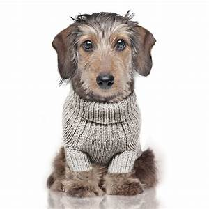 Milk And Pepper : pull pour chien de luxe habit pour chien torso milk and pepper ~ Orissabook.com Haus und Dekorationen