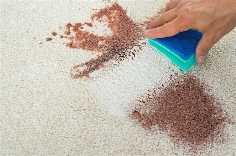Sprinkle some salt onto the area stained with coffee and leave. 4 Easy Ways To Get Blood Out Of Carpet: Clean And Remove Stains