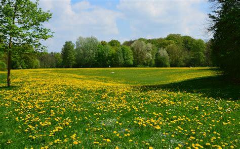 Frühling (4) In Der Hirschauenglischer Garten, München