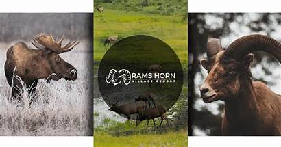 Rocky Mountain Animals Park National Rams Guide