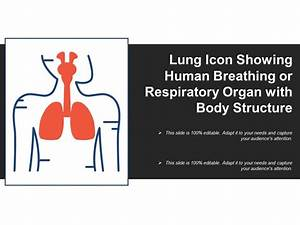 Lung Icon Showing Human Breathing Or Respiratory Organ