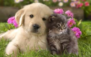 cats and dogs baby cats and dogs wallpaper