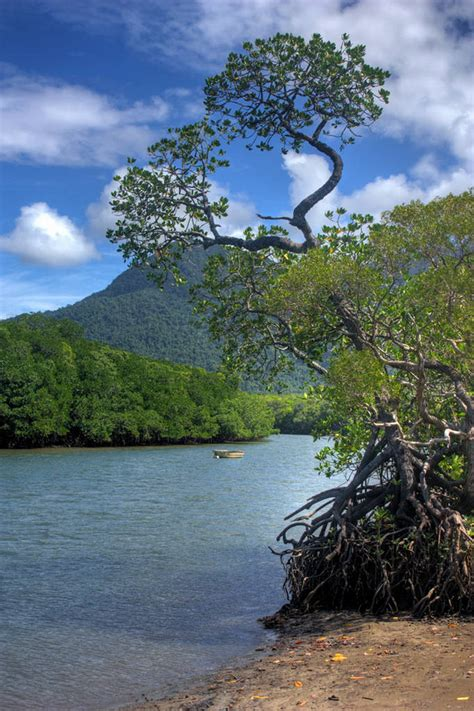 Daintree forest - Images and Information - XciteFun.net