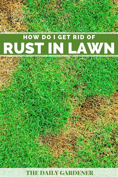 rust rid lawn forget don