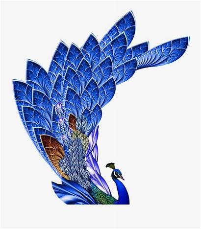 Peacock Feather Resolution Clipart Clipartkey
