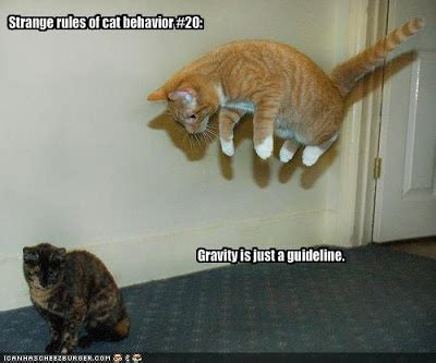 top collection funny cat pictures  captions