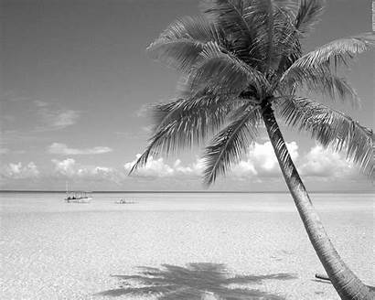 Beach Landscape Wallpapers Palm Backgrounds Beaches Tree
