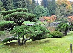 Les Plus Beaux Arbres Pour Le Jardin : quel arbre jardin japonais ~ Premium-room.com Idées de Décoration