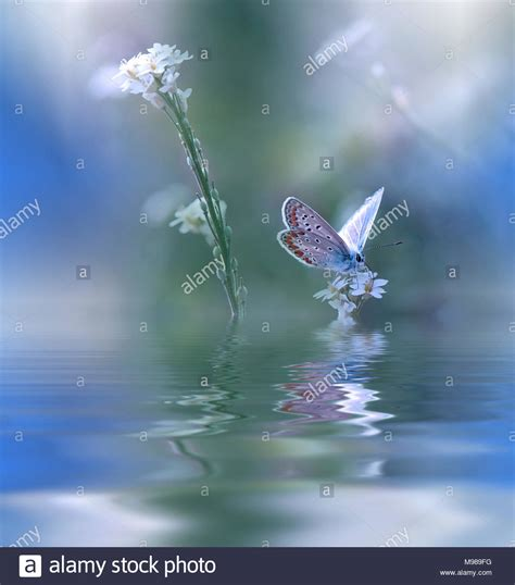blue magic butterfly  water  wildflowersfantasy