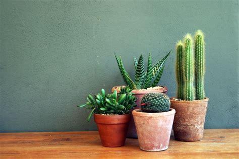 la succulente la plante grasse astuces d 233 co et conseil d entretien mettre en avant ses