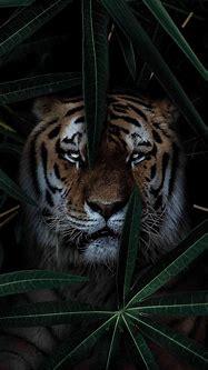 Wild Tiger iPhone Wallpaper - iPhone Wallpapers : iPhone ...