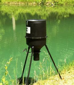 cheap feeder fish outdoor fish and feeder pond lake