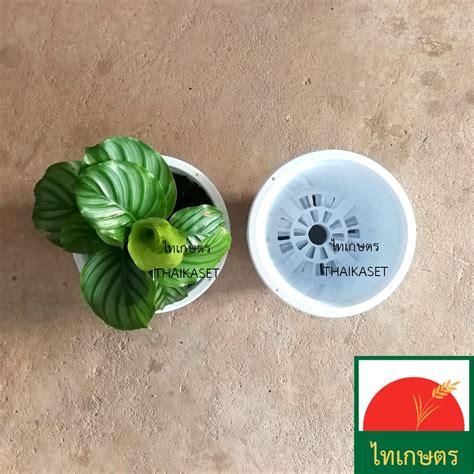 กระถางต้นไม้ มินิมอล กระถางดอกไม้ พลาสติก สีขาว 8 นิ้ว - ไทเกษตร