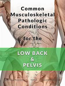 Common Musculoskeletal Pathologic Conditions For The Low