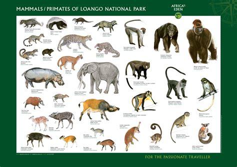 Wildlife Africas Eden
