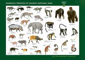 Mammals history and some interesting facts