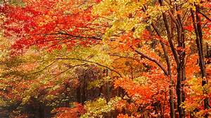 Fall, Foliage, Report, 2019, Warmer, Weather, Could, Delay, Peak, Fall, Foliage, For, Autumn, 2019