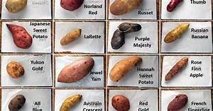 16 Different Types Of Potatoes