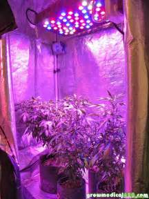 led grow lights raised to maximum height because they were