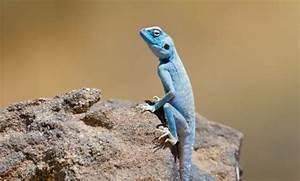 Animal Paparazzi for Jordan's Endangered Animals | Green ...