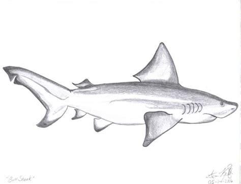 bull shark nature drawings pictures drawings ideas