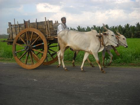 indian cart a bullock cart in a village in tamil nadu india