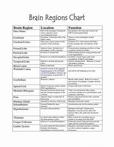 brain functions chart   Brain Parts -   Brain parts, Ap ...