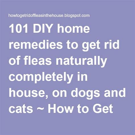 how to rid fleas in house 101 diy home remedies to get rid of fleas naturally