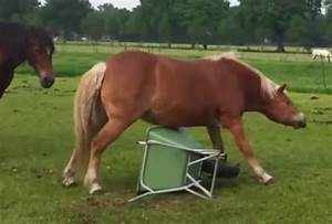 Sunday Funny - Cute Horse Video - Habitat For Horses