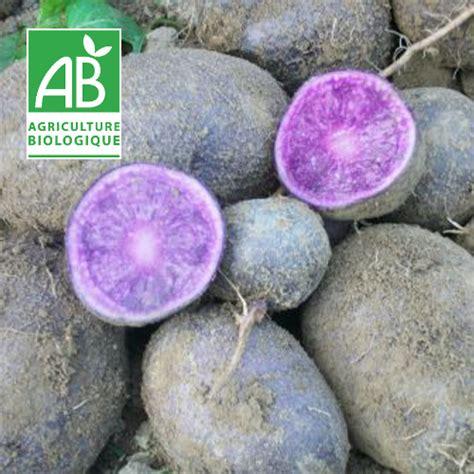 mabiodomus pomme de terre quot bleue d artois quot