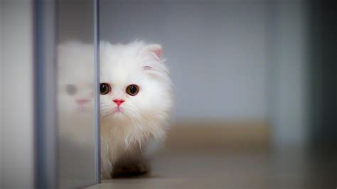 Download, share or upload your own one! Cute Cat 4K Wallpapers | HD Wallpapers