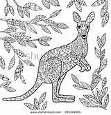 Coloring Kangaroo Adult Pages Wallaby Shutterstock Vector Australian Illustration Animal Adults Colouring Aboriginal Kangaroos Mandala Animals Drawing Royalty Macropodidae Mandalas sketch template