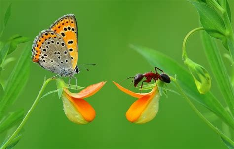 wallpaper grass macro butterfly insect moores images