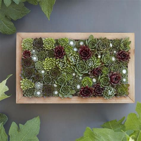 Vertical Garden Succulent Wall Panels by Modular Succulent Living Wall Panel Kit Succulent Diy
