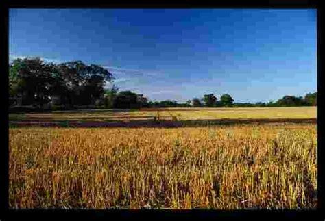 Eugene Hor's Blog: The Harvest Is Plentiful, But The ...