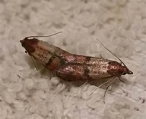 How to get rid of pantry moths 14 steps with pictures for Moths in my pantry