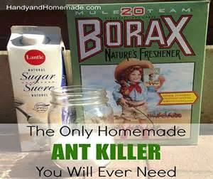 DIY Ant Killer Recipes