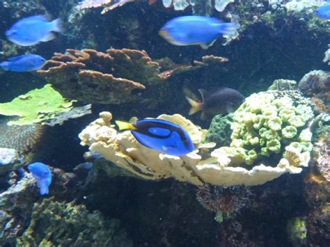 aquarium 2 picture of aquarium tropical de la porte doree tripadvisor
