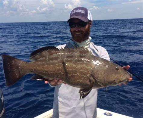 grouper fishing summer tactics surefire better tips capt ellis charlie