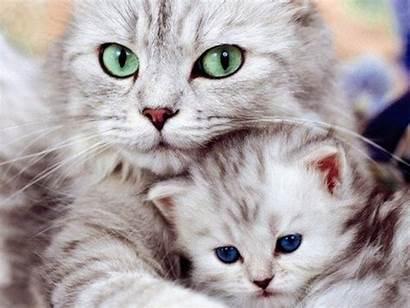 Kitten Cat Kittens Cats Wallpapers Animal Animals