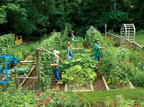 steal  secrets  growing   veggie patch