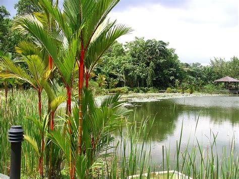 the botanical gardens singapore botanic gardens