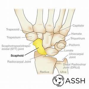Handcare Org  U0026gt  Anatomy  U0026gt  Bones