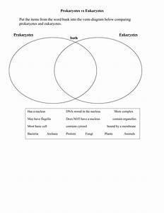 Venn Diagram Of Prokaryotes And Eukaryotes