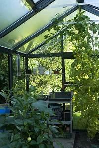Gurken Und Tomaten Zusammen Im Gewächshaus : tomaten im gew chshaus pflanzen tipps f r eine reiche ernte ~ A.2002-acura-tl-radio.info Haus und Dekorationen
