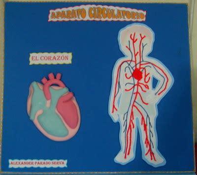 lindas manualidades sistema circulatorio maqueta