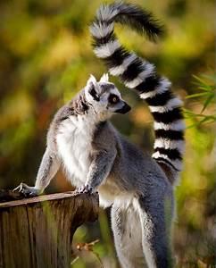 19 #Wisdom Teac... Cute Lemur Quotes