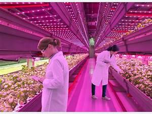 Beleuchtung Pflanzen Led : wachstumsf rdernde led beleuchtung von pflanzen ~ A.2002-acura-tl-radio.info Haus und Dekorationen