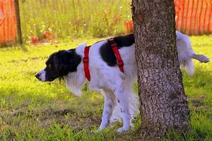 5 tips to stopping your dog peeing in the house for How to train your dog to pee